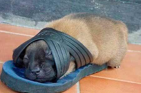 Спящие детеныши