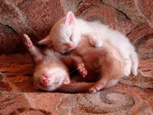 Спящие детеныши.