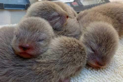 Спящие хомячки