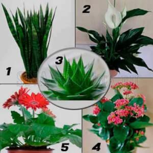 Комнатные-растения-для-спальни