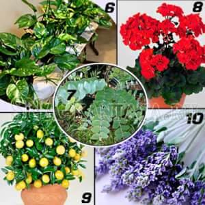 Комнатные-растения-для-спальни1