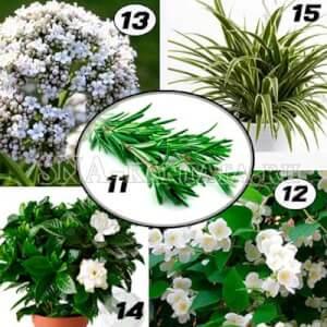 Комнатные-растения-для-спальни2