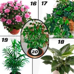 Комнатные-растения-для-спальни3