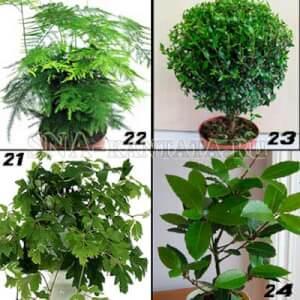 Комнатные-растения-для-спальни4