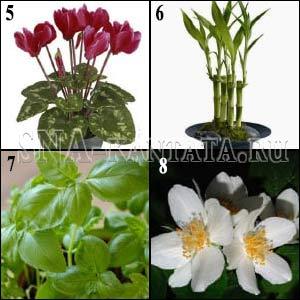 энергетика-комнатных-растений1