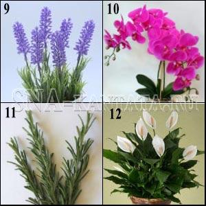 энергетика-комнатных-растений2