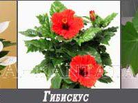 цветы-для-детской3