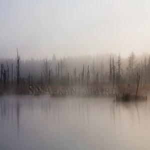 Сон-болото