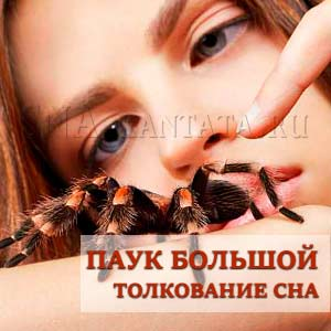 Pauk-bolshoj-k-chemu-snitsya