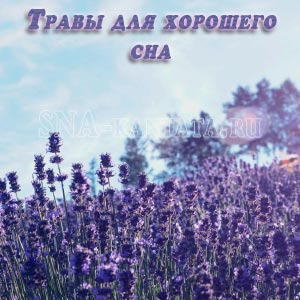 Травы со снотворным эффектом