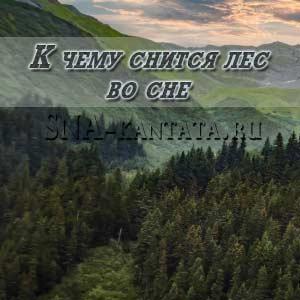 k-chemu-snitsya-les-vo-sne