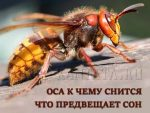 Osa-k-chemu-snitsya