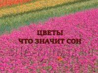 tsvety-chto-znachit-son