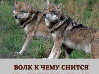 volk-prisnilsya-tolkovanie-sna