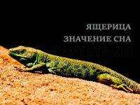 yashheritsa-znachenie-sna