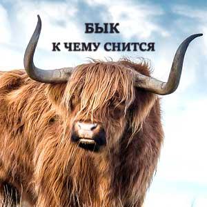 byk-k-chemu-snitsya