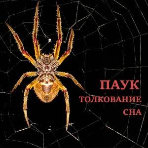 pauk-vo-sne-k-chemu-snitsya