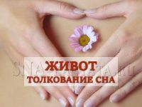 zhivot-k-chemu-snitsya-tolkovanie-sna