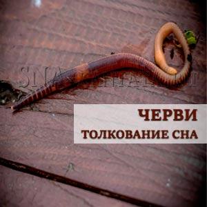 chervi-prisnilis-interpretatsiya-sna
