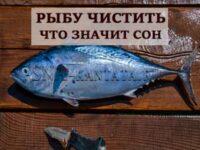 rybu-chistit-prisnilos-tolkovanie
