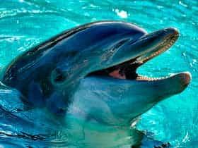 Как спят дельфины